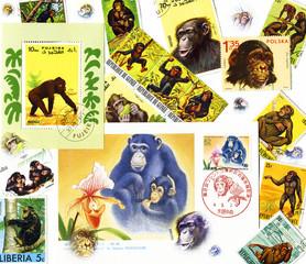 Шимпанзе на почтовых марках. Коллаж