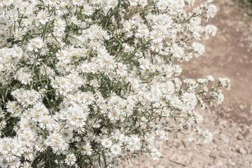 Closeup of blossom flower.