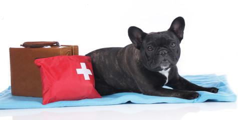 Hund mit Reiseapotheke und Koffer