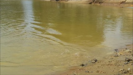 Dog swimming in a dam fetching a stick