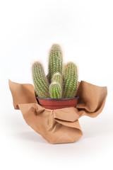 piccola pianta grassa