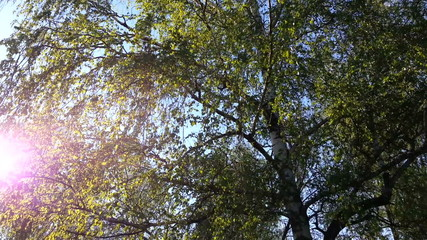 Video of sunshine through trees