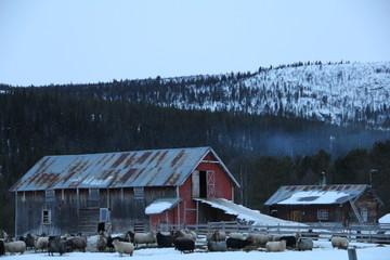 Schaffarm in Norwegen