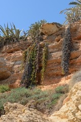 tropical vegetation on the slopes of the ravine