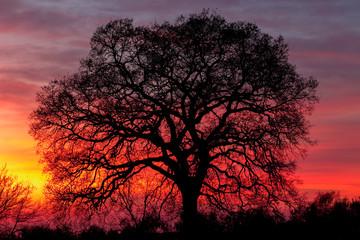 Huge tree over sunset