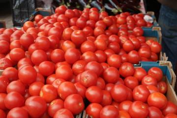 rote tomaten Stand Markt