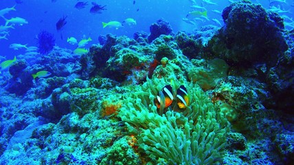 Underwater scene. Coral reef colorful fish groups.