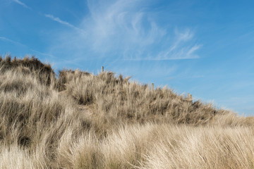 Sand dune with marram grass on sunny summer day