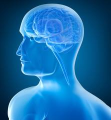 Human head and brain in xray