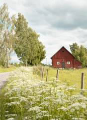 barn at a meadow in Sweden at midsummer