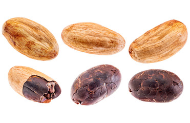 raw cacao beans isolated
