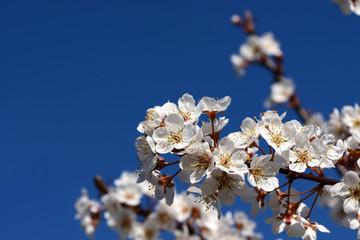 Frühling 340