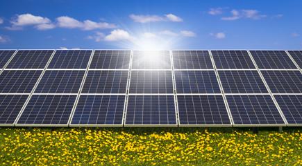 Sunlight gleams off solar panels in a field of wild flowers
