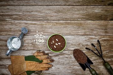 overhead view of gardening tools and a pot of soil with seeds