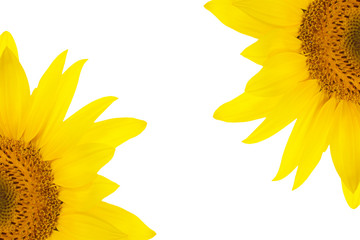 flower sunflower petals isolated white background for design