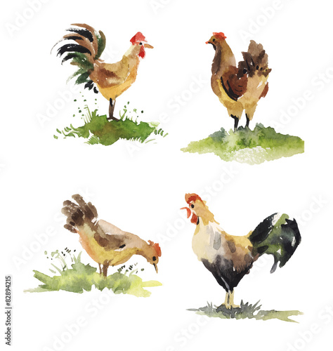 Fotobehang set of chicken and rooster watercolor