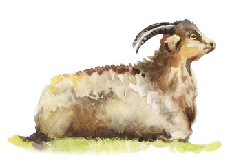 watercolor illustration a goat lying