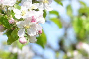 Frühling 339