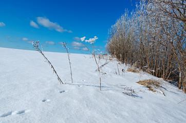 Winter landscape. frozen trees.