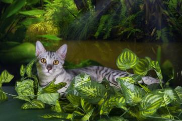 Savannah kitten in the rainforest