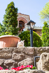 The cat and monastery bell tower on background