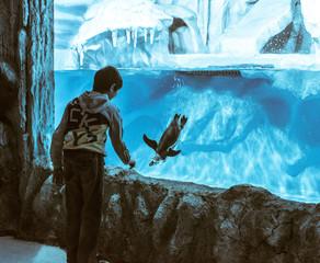 boy near the penguin aquarium