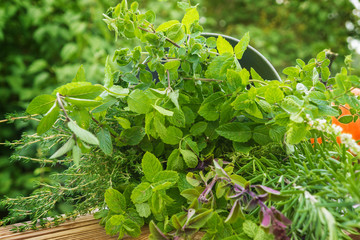Gartenkäuter, Heilpflanzen