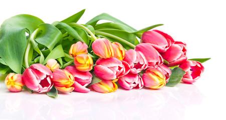 Tulpen, weißer Hintergrund