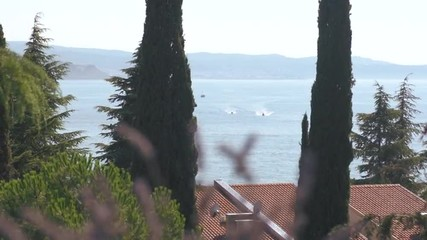 View Of Sea With Boats Through Green Trees