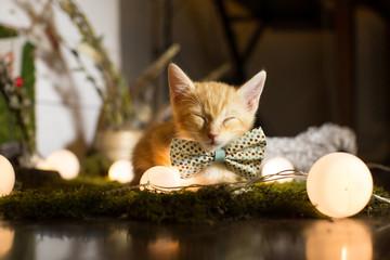 Sleeping red kitten tie a bow tie
