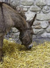 Donkey. Color image