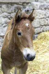Little brown foal portrait. Color image