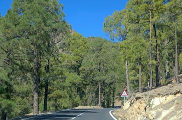 Road in Teide National Park,Tenerife.