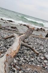 Teibholz am Ostseestrand von Rügen