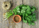 Bunch fresh cilantro and coriander seeds - 82935272