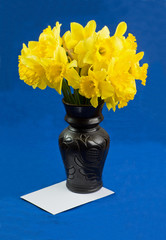 Bucket of narcissus flowers in vase, envelope on blue background