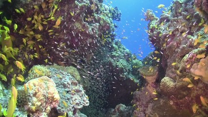 Colorful Fish on Vibrant Coral Reef, static scene, Red sea