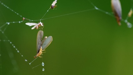 a termite is trapped by spider web in the tropical rain forest