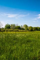 Campi ulivi prati, Paesaggio di campagna Toscana, agricoltura