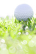 golf ball on grass with water drops