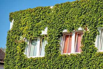 Begrünte Hausfassade