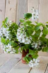 A bouquet of flowering branches of fruit trees on the unpainted