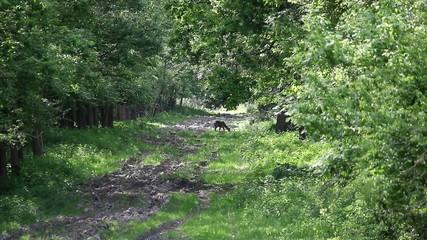 doe in forest wildlife