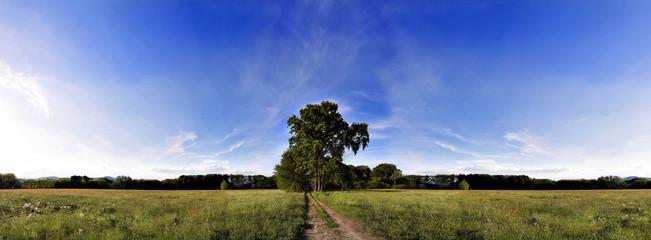 albero in mezzo a un prato di campagna