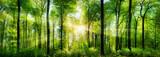 Panorama lasu z promieniami słońca