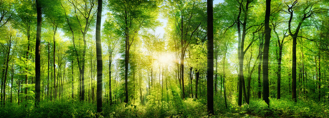 Lesie Panorama z promieni słońca