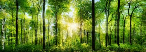 Leinwandbild Motiv Wald Panorama mit Sonnenstrahlen