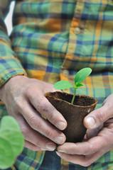 semis dans pot biodégradable tenu par un jardinier
