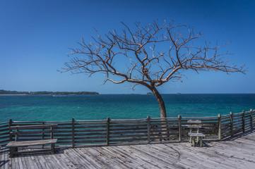 trockener Baum am Wasser