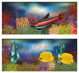 Underwater banners with tropical fish, vector